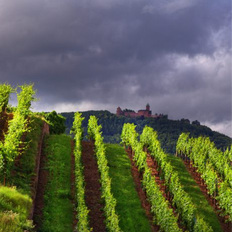 E-Commerce – Cooking Corinne Alsace (vineyards)